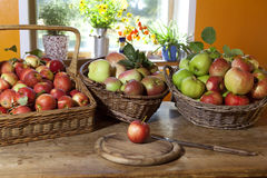 Grazing baskets with apples. Harvest in autumn Stock Image