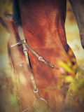 Grazing bay horse from fall Royalty Free Stock Photos