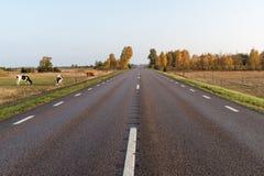 Grazing cattle by roadside Stock Photo