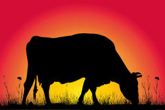 Grazing cow silhouette Stock Images