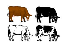 Grazing Cow vector illustration Royalty Free Stock Images