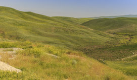 Grazing cows in the mountains of Gobustan(Azerbaijan) Royalty Free Stock Photography