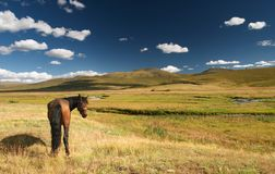 Grazing horse. Landscape with grassland, blue sky and grazing horse Stock Photos