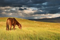 Grazing horse. Sunset landscape with grazing horse Royalty Free Stock Images