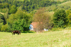 Grazing horse on beautiful green hills Royalty Free Stock Photography