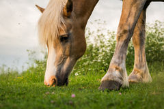 Grazing Horse Stock Photo