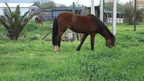 Grazing Horse stock video footage