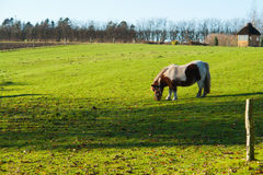 Grazing horse in a farm Stock Images