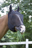 Grazing horse with fly mask Royalty Free Stock Photography