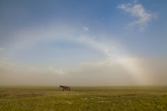 Grazing horse on a meadow Royalty Free Stock Photography