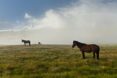 Grazing horse on a misty meadow Stock Photo