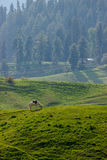 Grazing horse, mountain landscape Stock Photography