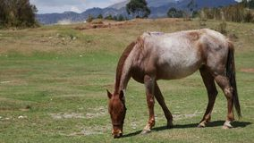Grazing horse on mountain pasture. Beautiful rural landscape. Shot of a Grazing horse on mountain pasture. Beautiful rural landscape stock footage