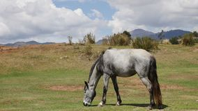 Grazing horse on mountain pasture. Beautiful rural landscape. Shot of a Grazing horse on mountain pasture. Beautiful rural landscape stock video footage