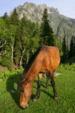 Grazing horse and mountains Royalty Free Stock Photo