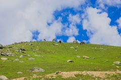 Grazing Horse in the mountains Royalty Free Stock Image