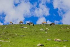 Grazing Horse in the mountains Stock Photography
