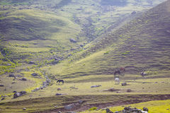 Grazing Horse in the mountains Royalty Free Stock Photo