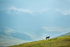 Grazing horse in mountains at sunset Stock Images