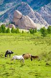 Grazing horses. Group of horses grazing at green pasture stock photos