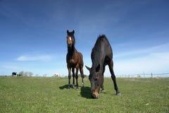 Free Grazing Horses Stock Photo - 2297090