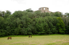 Grazing horses. Castle ruin and grazing horses Stock Photo