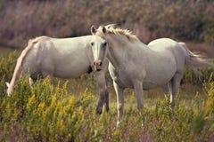 Free Grazing Horses Royalty Free Stock Photos - 57234208