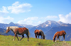Grazing horses in alpine landscape Royalty Free Stock Image