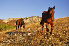 Grazing horses in a field Stock Photos