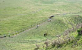 Grazing horses on a green hills. Grazing horses on a green country side Stock Images