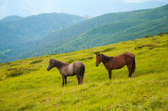 Two horses is grazed against mountains in the summer. Royalty Free Stock Photography