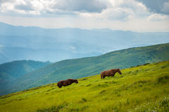 Two horses is grazed against mountains in the summer. Royalty Free Stock Photo