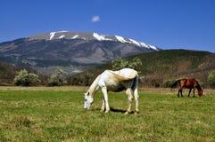 Grazing horses. Landscape with Koritnik mountain grassland, southern Kosovo and grazing horses Royalty Free Stock Photo