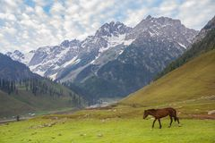 Grazing horses in the mountains Stock Photography