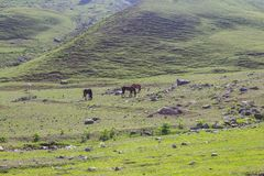 Grazing horses in the mountains Royalty Free Stock Image