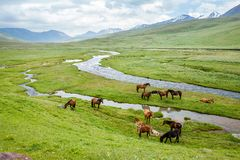 Grazing horses in the mountains Royalty Free Stock Images