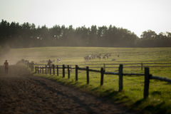 Grazing horses. In the pasture Stock Image