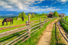 Grazing horses on the ranch,Bran,Transylvania,Romania,Europe Stock Images