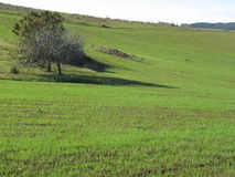 Grazing land. In the south Sardinia without sheeps Royalty Free Stock Image