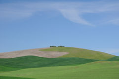 Grazing lands under blue sky Stock Images