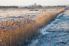 Grazing marsh and channel in frost Royalty Free Stock Images