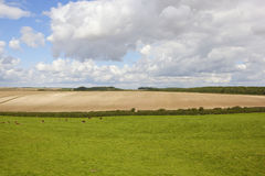 Grazing meadow and cultivated field Stock Image