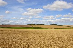 Grazing meadows and wheat Stock Images