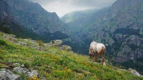 Grazing in the mountains stock footage