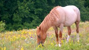 Grazing in peace stock footage