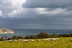 Grazing sheep sea and cliffs Stock Photo