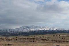 Grazing sheep in southeastern Kazakhstan Stock Images