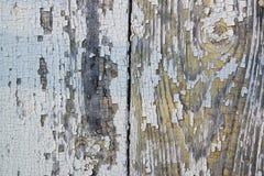 Grea e fondo bianco della plancia di legno dipinta stagionata Fotografia Stock