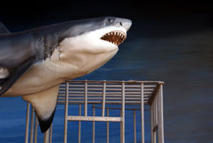 Greak white shark and dive cage Royalty Free Stock Photo