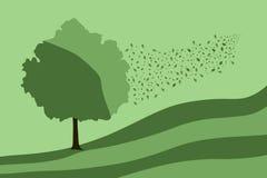 grean drzewo Zdjęcie Royalty Free